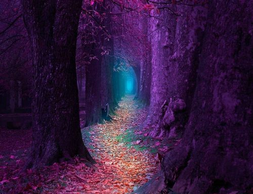 When the path is beautiful, let us not ask where it leads